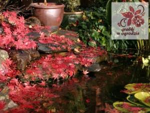 oczko-wodne-jesienia-1